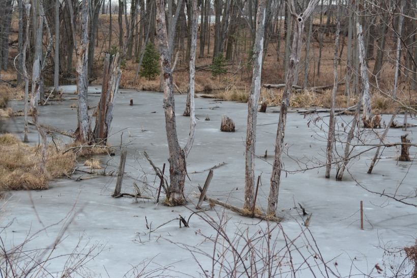 Frozen pond just up from Waverly Mansion. Photo by Mike Hartley