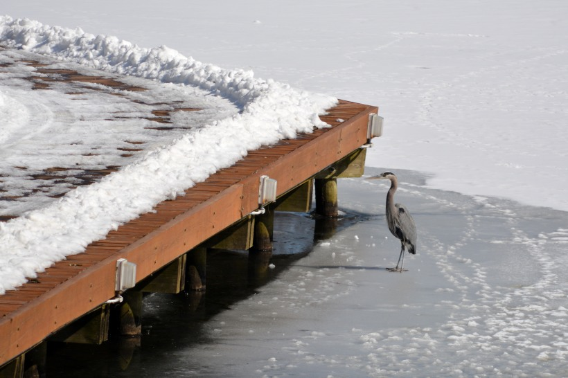 How am I supposed to fish under there? Photo by Mike Hartley