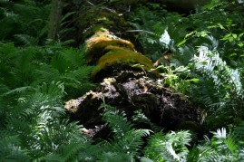 More moss and ferns Photo by Mike Hartley