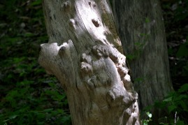 Natures wood carving Photo by Mike Hartley