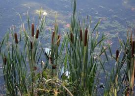 Lake Kittamaqundi Photo by Mike Hartley
