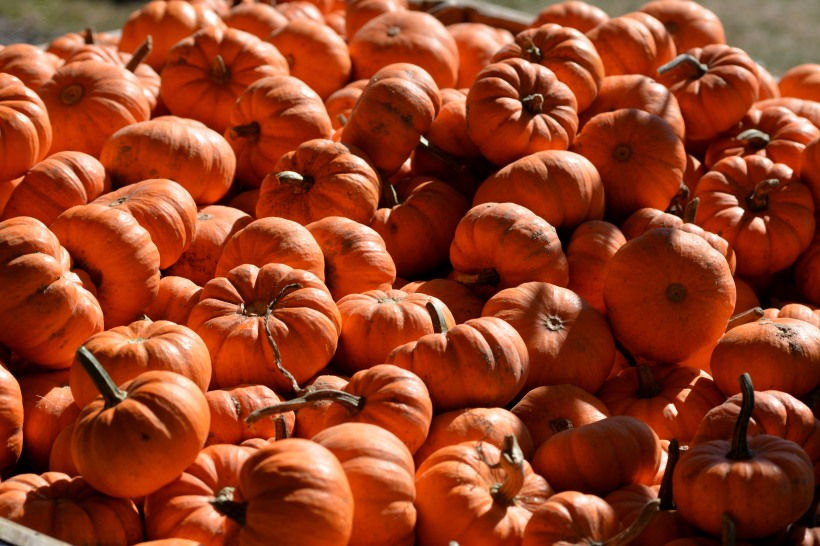 Pick a pumpkin, any pumpkin.  Photo by Mike Hartley