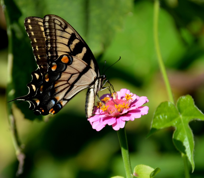 Delicate beauty. Photo by Mike Hartley