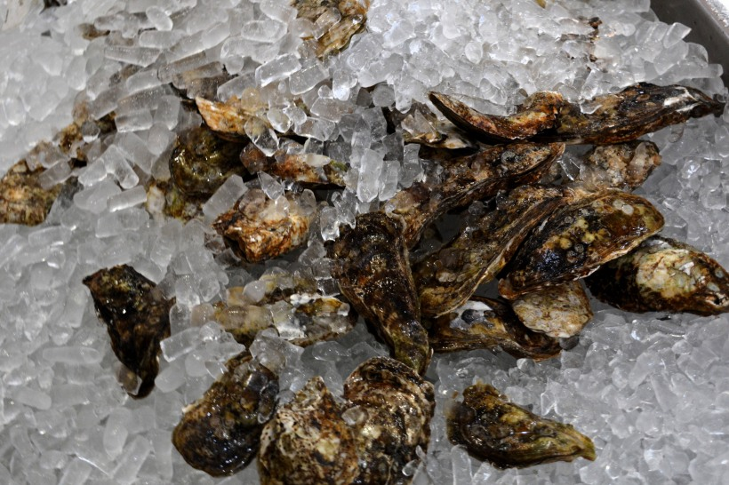 Oysters Photo by Mike Hartley