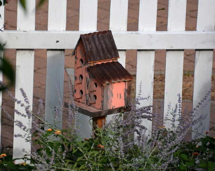 Birdhouse next door. Photo by Mike Hartley