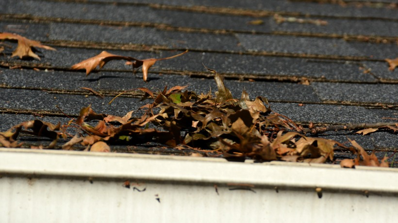 Leaves meet gutter, gutters meet leaves. Oh you two know each other.  Photo by Mike Hartley