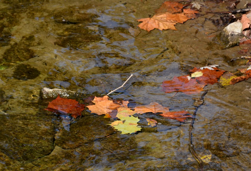 Floating Fall Photo by Mike Hartley