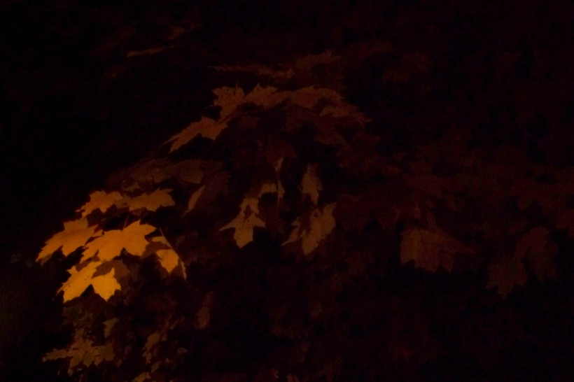 Night leaves. Photo by Mike Hartley